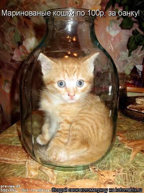 Котоматрица: Маринованые кошки по 100р. за банку!
