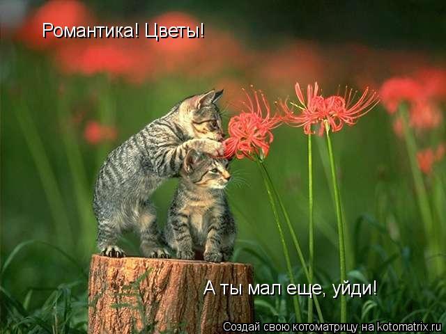 Котоматрица: Романтика! Цветы! А ты мал еще, уйди!