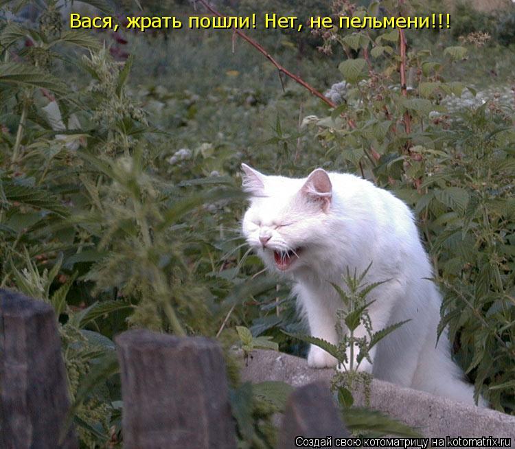 Котоматрица: Вася, жрать пошли! Нет, не пельмени!!!