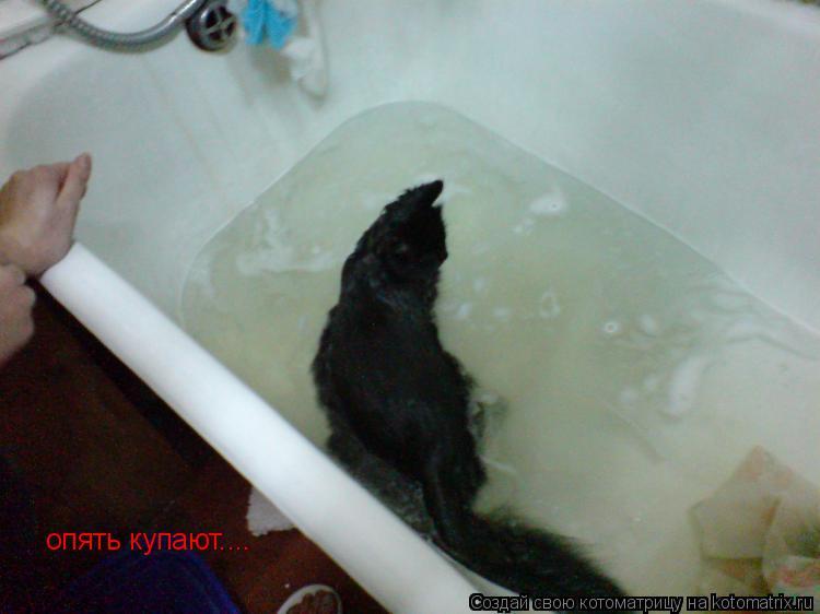 Котоматрица: опять купают....