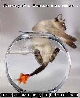 Котоматрица: Ловись рыбка...Большая и маленькая...