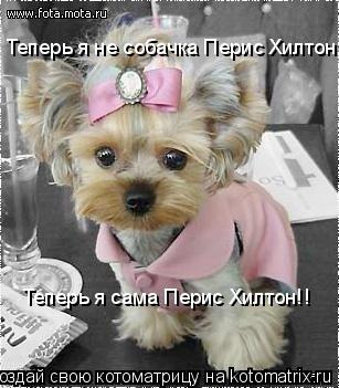 Котоматрица: Теперь я не собачка Перис Хилтон, Теперь я сама Перис Хилтон!!