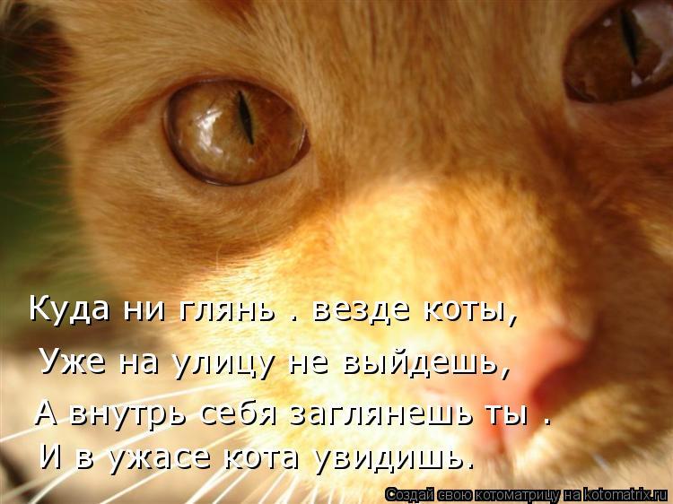 Котоматрица: Куда ни глянь — везде коты, Уже на улицу не выйдешь, А внутрь себя заглянешь ты — И в ужасе кота увидишь.