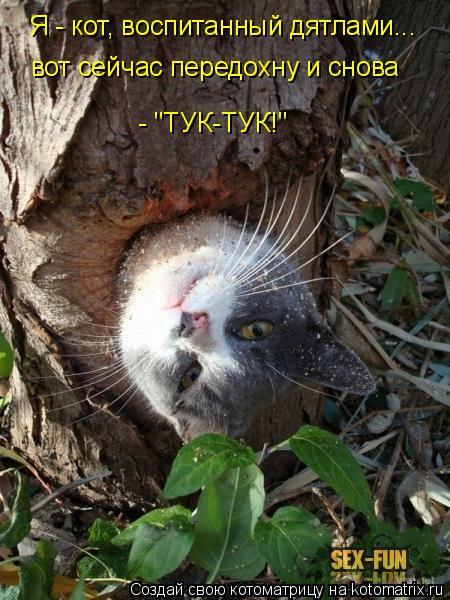 """Котоматрица: Я - кот, воспитанный дятлами... вот сейчас передохну и снова  - """"ТУК-ТУК!"""""""