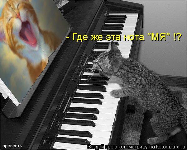 "Котоматрица: - Где же эта нота ""МЯ"" !?"