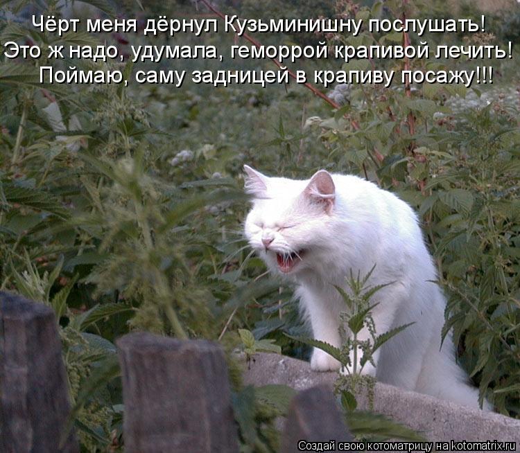 Котоматрица: Чёрт меня дёрнул Кузьминишну послушать!  Это ж надо, удумала, геморрой крапивой лечить! Поймаю, саму задницей в крапиву посажу!!!