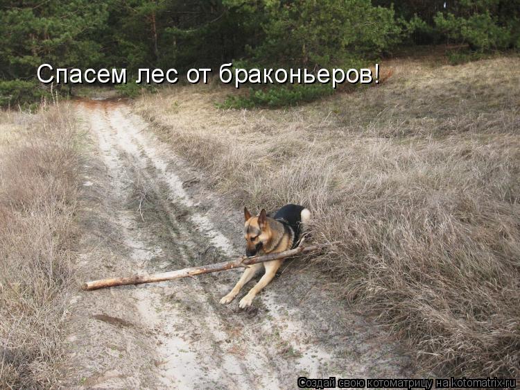 Котоматрица: Спасем лес от браконьеров!