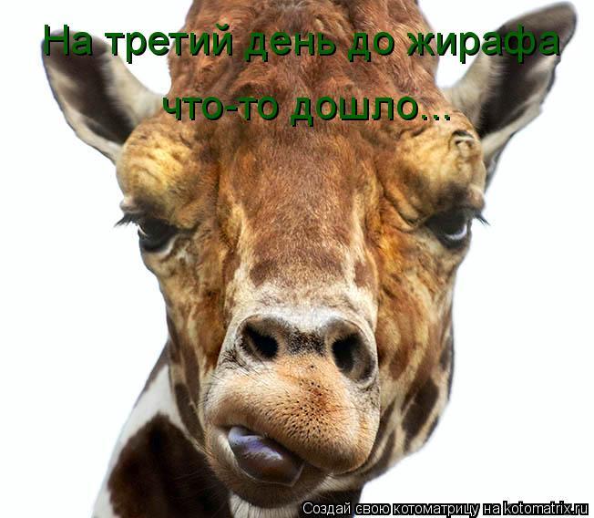 Котоматрица: На третий день до жирафа что-то дошло...