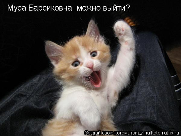 Котоматрица: Мура Барсиковна, можно выйти?