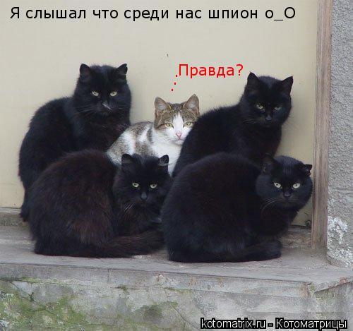 Котоматрица: Я слышал что среди нас шпион о_О . . . Правда?