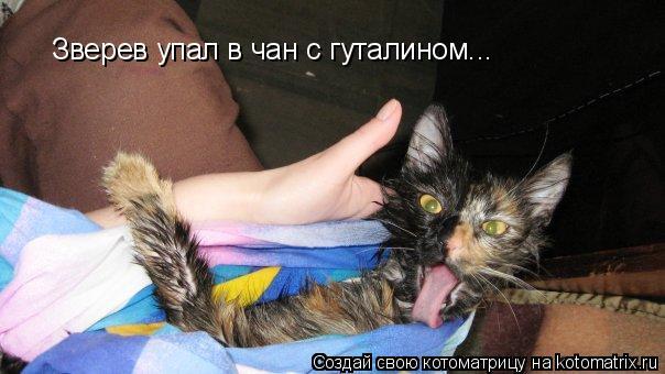 Котоматрица: Зверев упал в чан с гуталином...