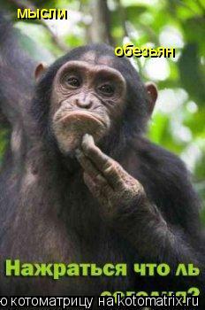 Котоматрица: мысли обезьян