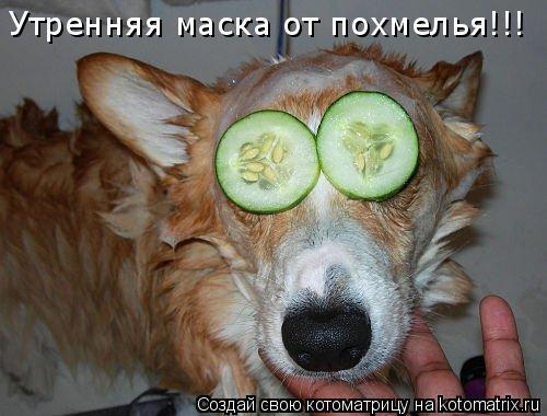Котоматрица: Утренняя маска от похмелья!!!
