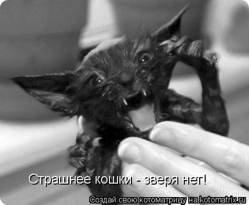 Котоматрица: Страшнее кошки - зверя нет!