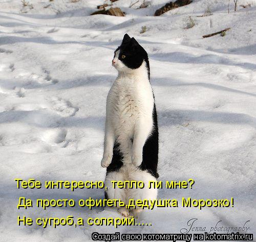 Котоматрица: Не сугроб,а солярий..... Тебе интересно, тепло ли мне? Да просто офигеть,дедушка Морозко!