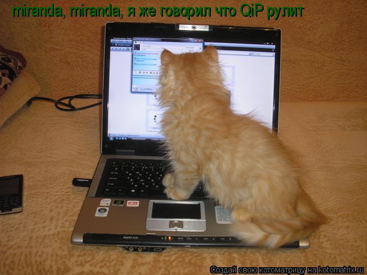Котоматрица: miranda, miranda, я же говорил что QiP рулит