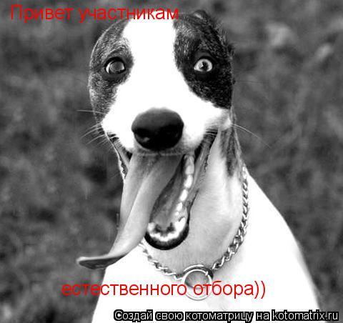 Котоматрица: Привет участникам естественного отбора))