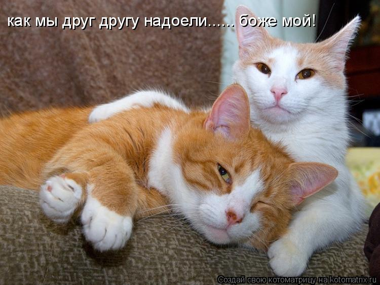 Котоматрица: как мы друг другу надоели...... боже мой! как мы друг другу надоели...... боже мой!