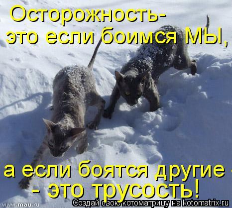 Котоматрица: Oсторожность- это если боимся МЫ, а если боятся другие - это трусость! - это трусость!