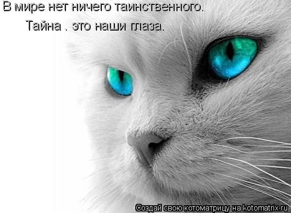 Котоматрица: В мире нет ничего таинственного.  Тайна – это наши глаза.