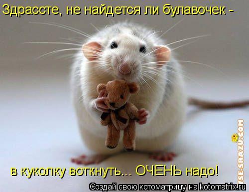 Котоматрица: Здрассте, не найдется ли булавочек -  в куколку воткнуть... ОЧЕНЬ надо!