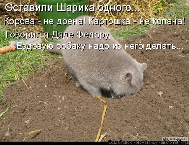 Котоматрица: Корова - не доена! Картошка - не копана! Говорил я Дяде Федору,  Оставили Шарика одного... Ездовую собаку надо из него делать...
