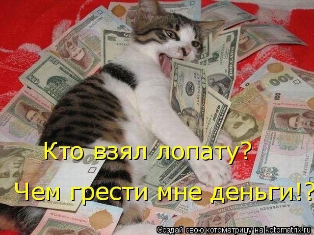Котоматрица: Кто взял лопату?   Чем грести мне деньги!?