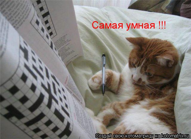 Котоматрица: Самая умная !!!