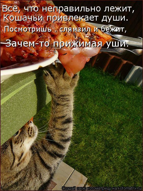 Котоматрица: Всё, что неправильно лежит, Кошачьи привлекает души. Посмотришь — слямзил и бежит, Зачем-то прижимая уши.