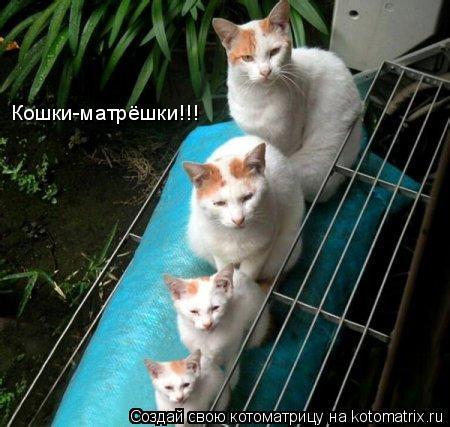 Котоматрица: Кошки-матрёшки!!!