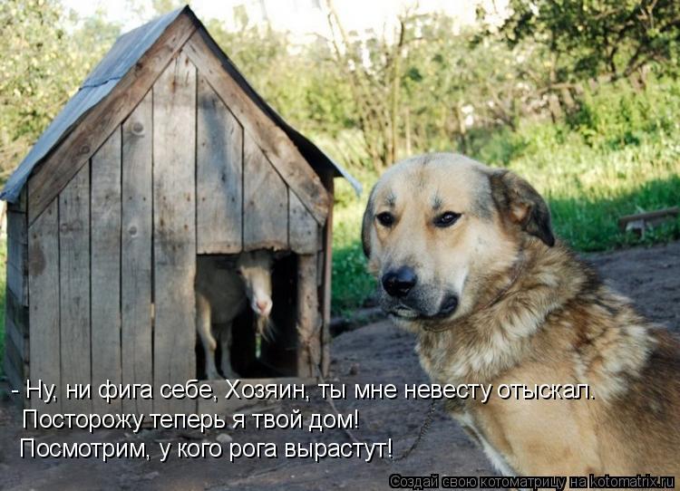 Котоматрица: - Ну, ни фига себе, Хозяин, ты мне невесту отыскал. Посторожу теперь я твой дом! Посмотрим, у кого рога вырастут!