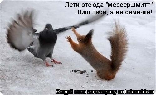 """Котоматрица: Лети отсюда """"мессершмитт""""! Шиш тебе, а не семечки!"""