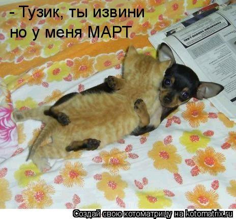 Котоматрица: - Тузик, ты извини но у меня МАРТ