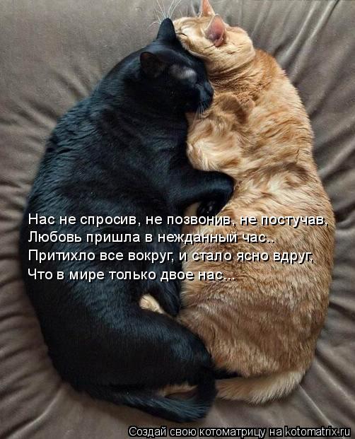 Котоматрица: Нас не спросив, не позвонив, не постучав, Любовь пришла в нежданный час.. Притихло все вокруг, и стало ясно вдруг, Что в мире только двое нас...