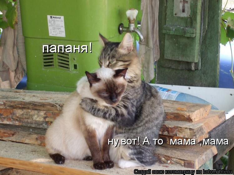 Котоматрица: ну,вот! А то  мама ,мама папаня!