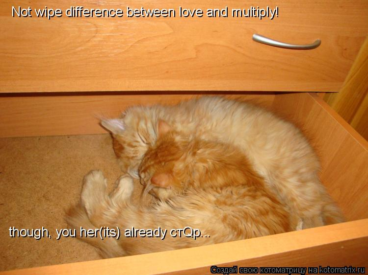 Котоматрица: Not wipe difference between love and multiply! though, you her(its) already стQр...