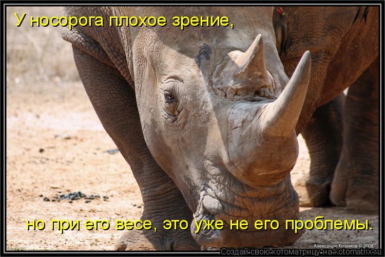 Котоматрица: У носорога плохое зрение, но при его весе, это уже не его проблемы.