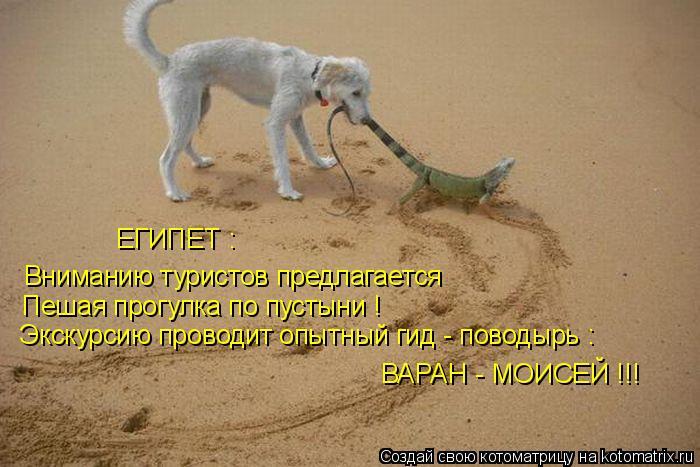 Котоматрица: ЕГИПЕТ : Вниманию туристов предлагается ВАРАН - МОИСЕЙ !!! Пешая прогулка по пустыни ! Экскурсию проводит опытный гид - поводырь :