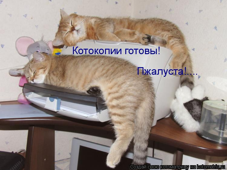 Котоматрица: Котокопии готовы! Пжалуста!....