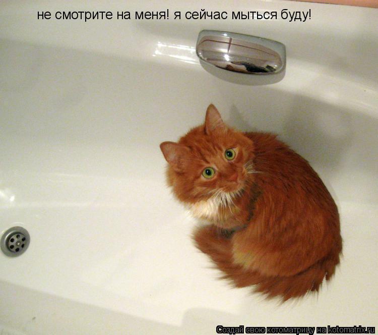 Котоматрица: не смотрите на меня! я сейчас мыться буду!