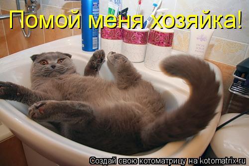 Котоматрица: Помой меня хозяйка!