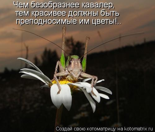 Котоматрица: Чем безобразнее кавалер, тем красивее должны быть преподносимые им цветы!..