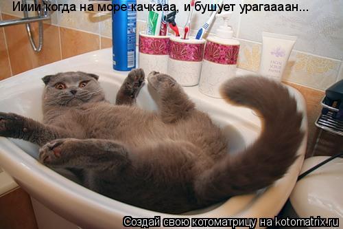 Котоматрица: Ииии когда на море качкааа, и бушует урагаааан...