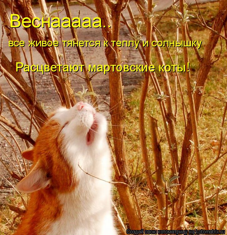 Котоматрица: Веснааааа.. все живое тянется к теплу и солнышку Расцветают мартовские коты!