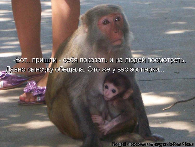 Котоматрица: Давно сыночку обещала. Это же у вас зоопарки... -Вот...пришли - себя показать и на людей посмотреть.
