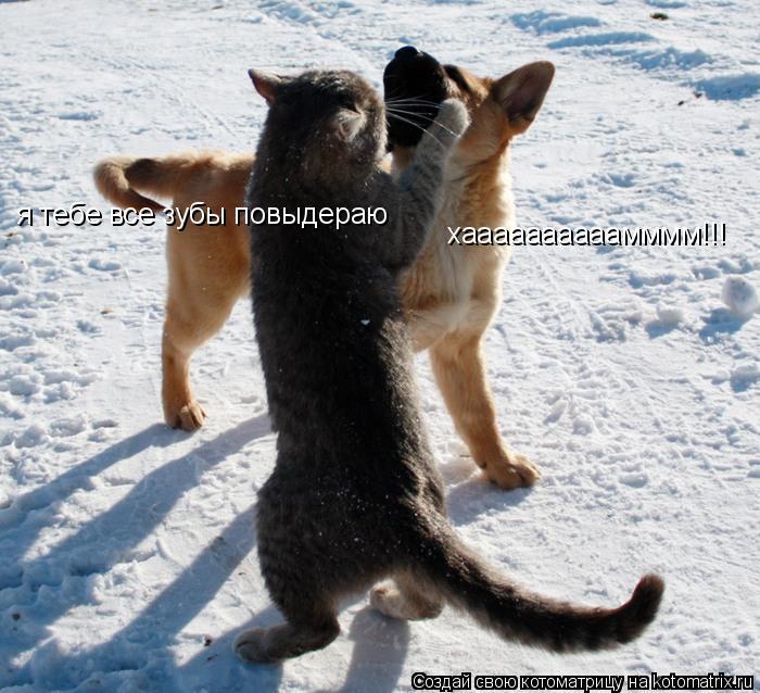 Котоматрица: я тебе все зубы повыдераю хаааааааааамммм!!!