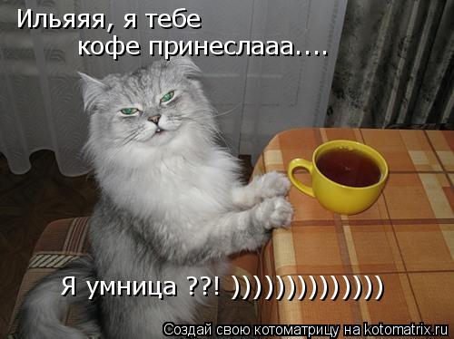 Котоматрица: Ильяяя, я тебе  кофе принеслааа.... Я умница ??! ))))))))))))))
