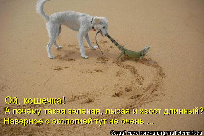 Котоматрица: Ой, кошечка!  А почему такая зеленая, лысая и хвост длинный? Наверное с экологией тут не очень ...