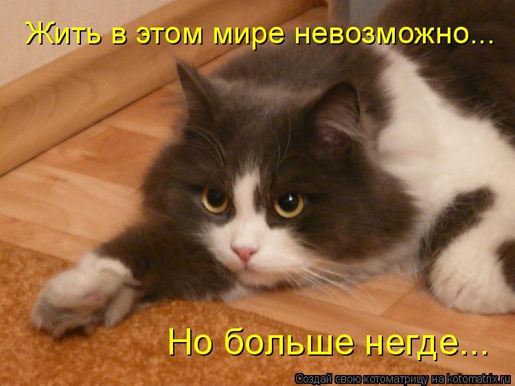 Котоматрица: Жить в этом мире невозможно... Но больше негде...
