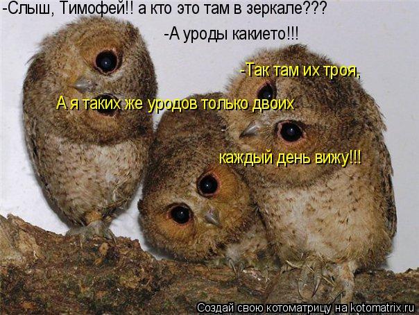 Котоматрица: -Слыш, Тимофей!! а кто это там в зеркале??? -А уроды какието!!! -Так там их троя,  А я таких же уродов только двоих  каждый день вижу!!!